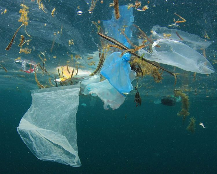 WWF Plastic File #2: stop using single-use plastics