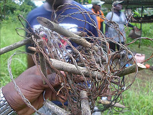 Ecoguards remove wire snares  from the park - Bakossi National Park  	© MINFOF/Kupe Muanenguba