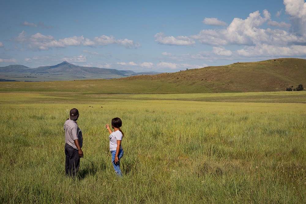 Nkazi in grasslands