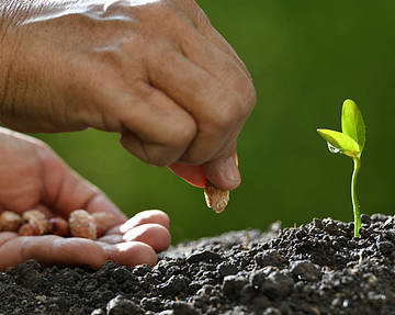 A hand planting seeds in the soil