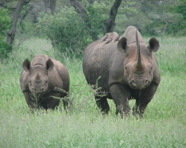 WWF reacts to rhino poaching statistics for 2019