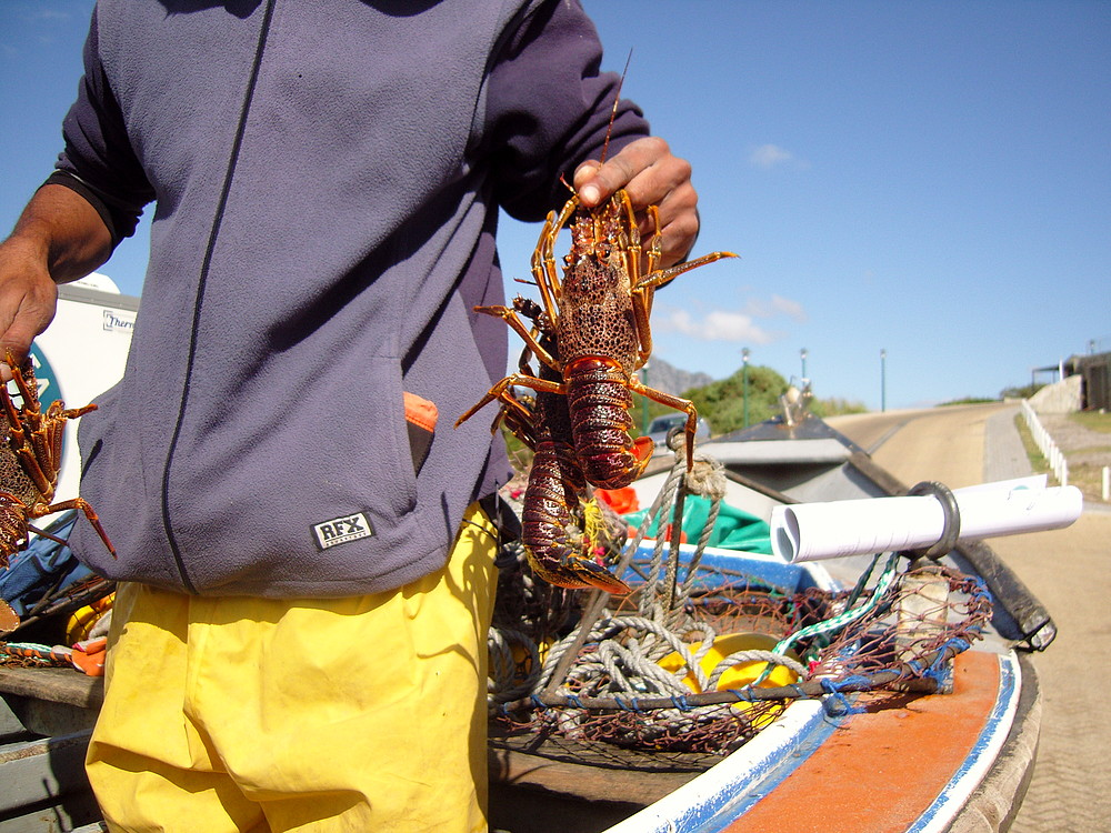 Fisherman with rock lobster