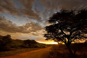 Sunset in the Kalahari bushveld, South Africa