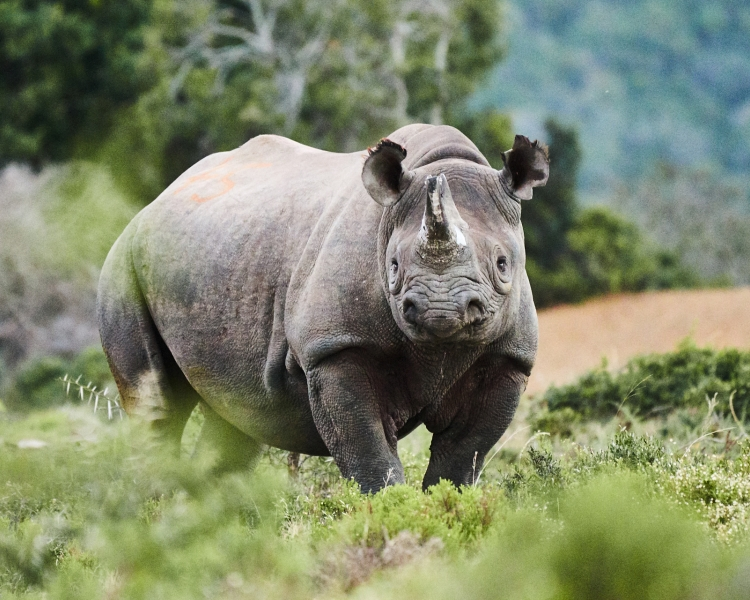 World Rhino Day: It's not only about the rhinos